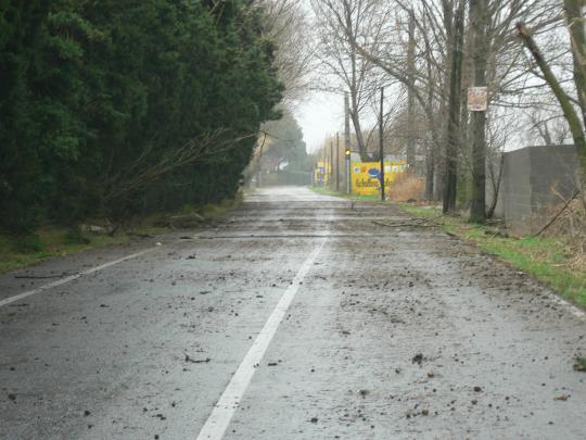 Llevantada desembre 2008